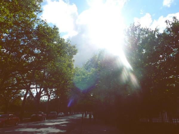 williamsburg sunshine brooklyn