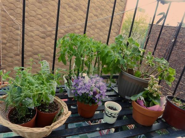 plants fire escape garden brooklyn