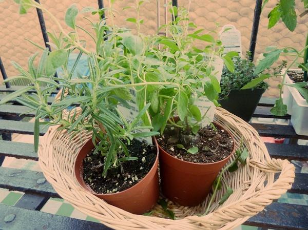 herb garden fire escape brooklyn