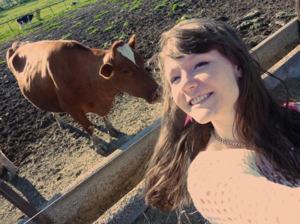 beautiful brown cow farm