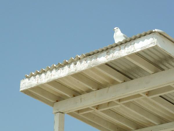 beach seagul