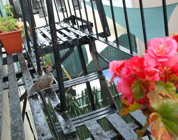 bird on the fire escape brooklyn summer